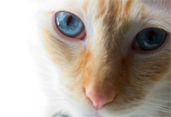 Is your cat losing weight?