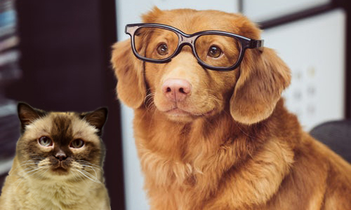 Be Smart About Flea & Tick Prevention