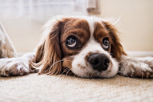 Top Toxins of 2016 for Pets