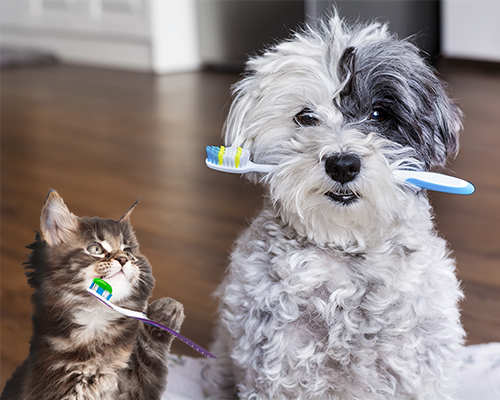 Dental tips for your pet