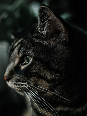 Could your cat have ear mites? | Grooming Topics