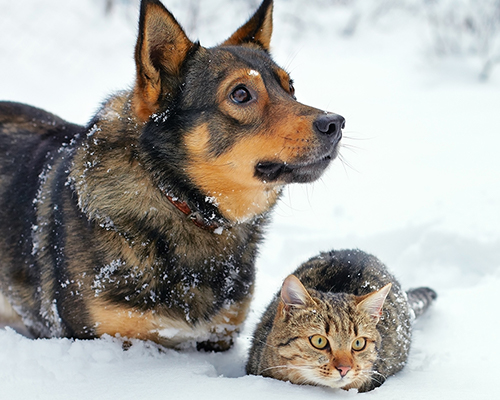 Does your pet have cabin fever? Cure it with indoor play!