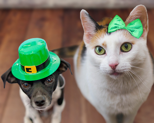 5 Pet Hazards to Avoid on St. Patrick's Day
