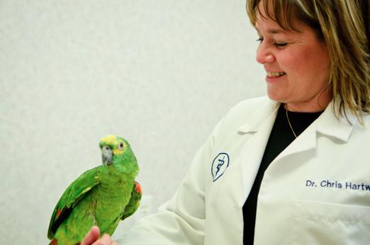 Bird Nutrition Tips - Delavan Lakes Veterinary Clinic