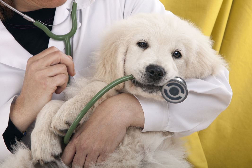 Get the most from your vet visit