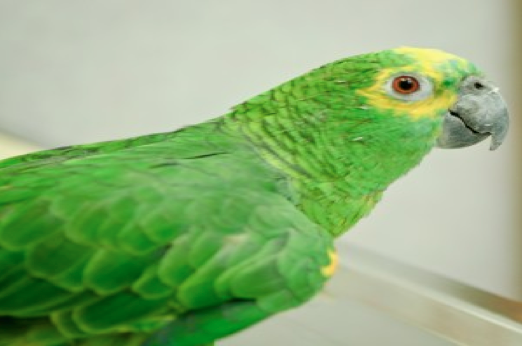 Keeping your bird healthy