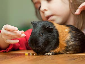 Child with guinea pig