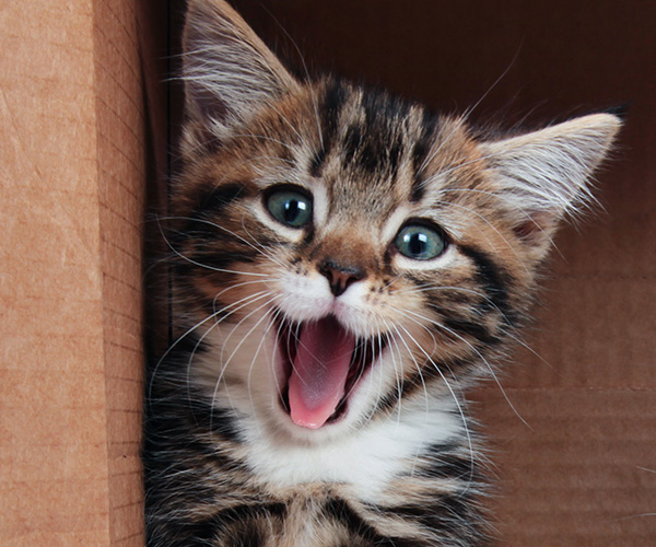 How to Make Your Cat a Happy Cat - Delavan Lakes Veterinary Clinic