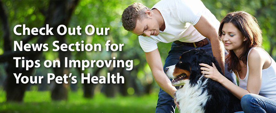 News Section for Tips on Improving Your Pet's Health